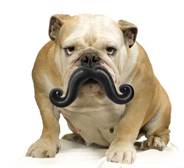 Humunga Stache Durable Dog's Toys