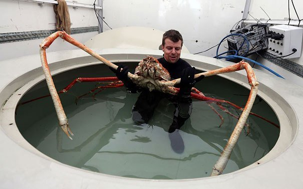 Japanese Spider Crab Strange Animals