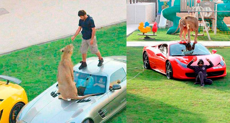 Money can buy and enslave everything, Wild animals are nothing Crazy Dubai