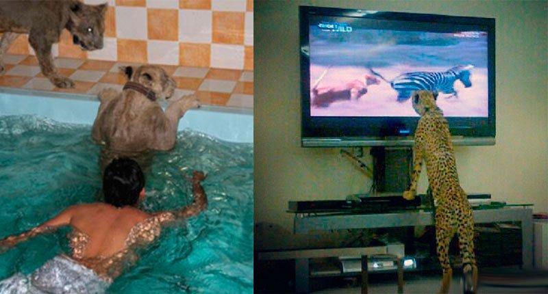 Rich men love exotic animals at home Crazy Dubai