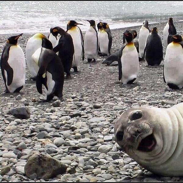 Selfie seal Funny Photobombs