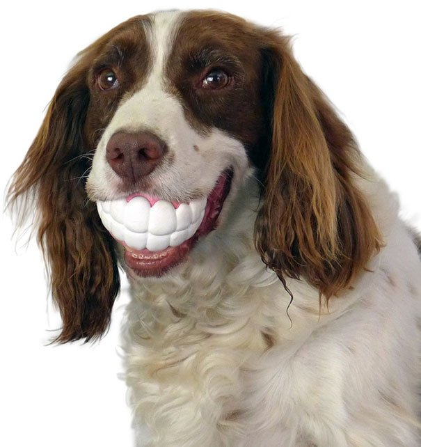Teeth-shaped Ball Dog's Toys