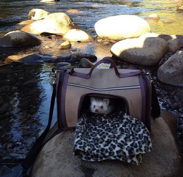 Travel bag or luxurious cabin Hedgehog