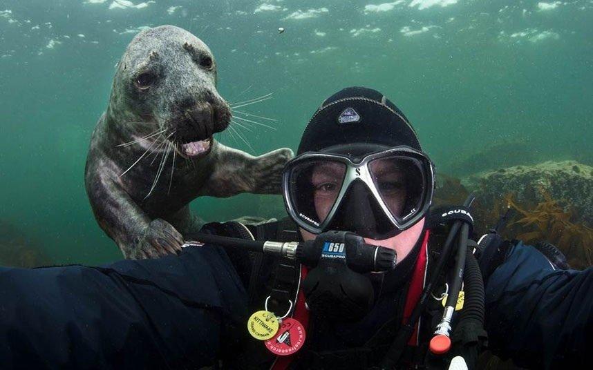 Underwater Selfie Fails Funny Photobombs