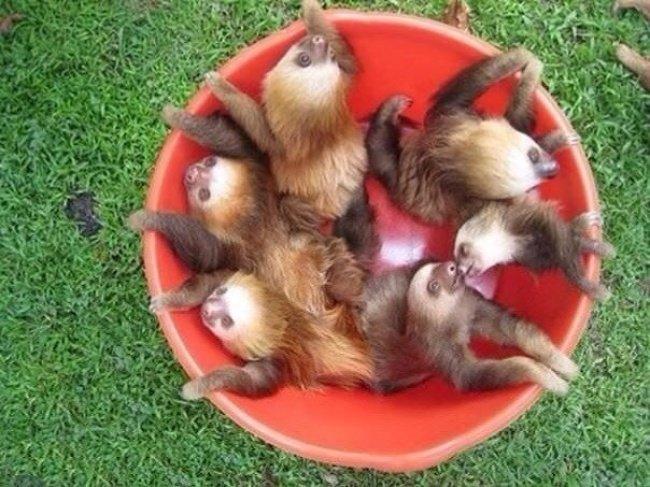 bucket of cuteness Popular photograph