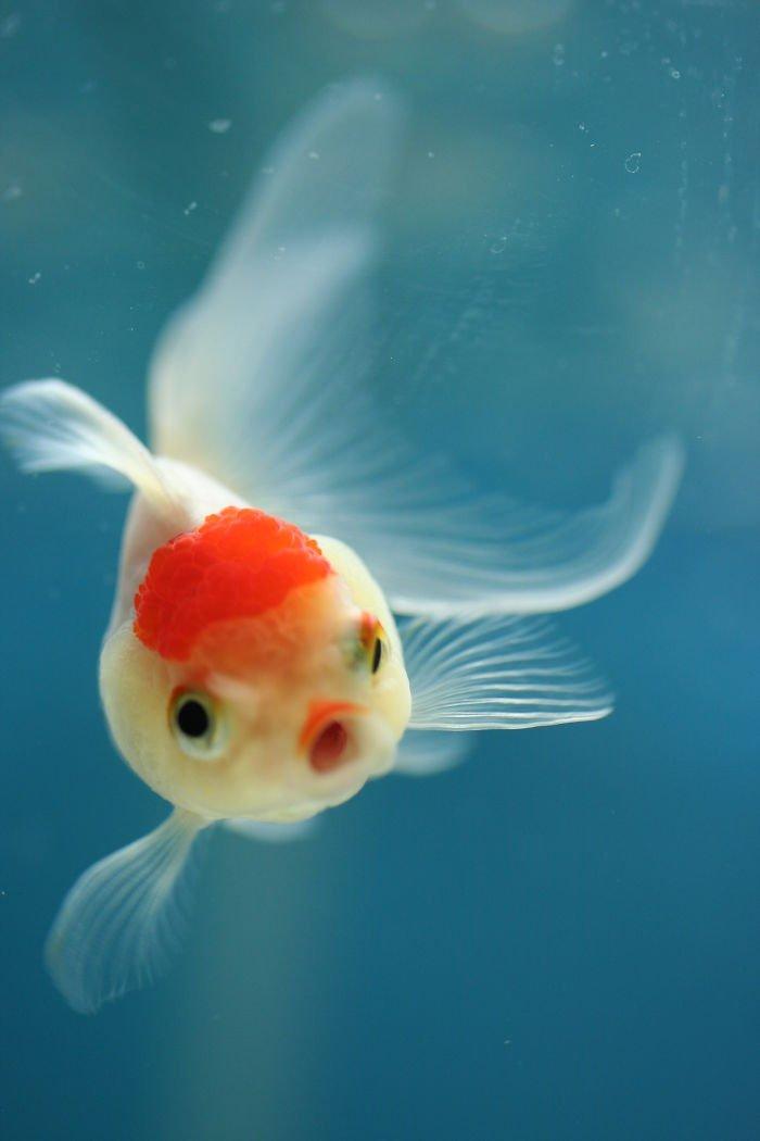 Fish Surprised