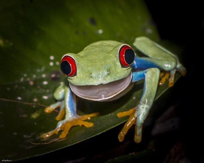 Frog Surprised