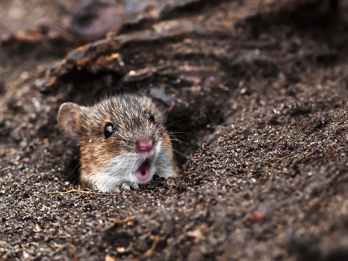 Surprised mouse