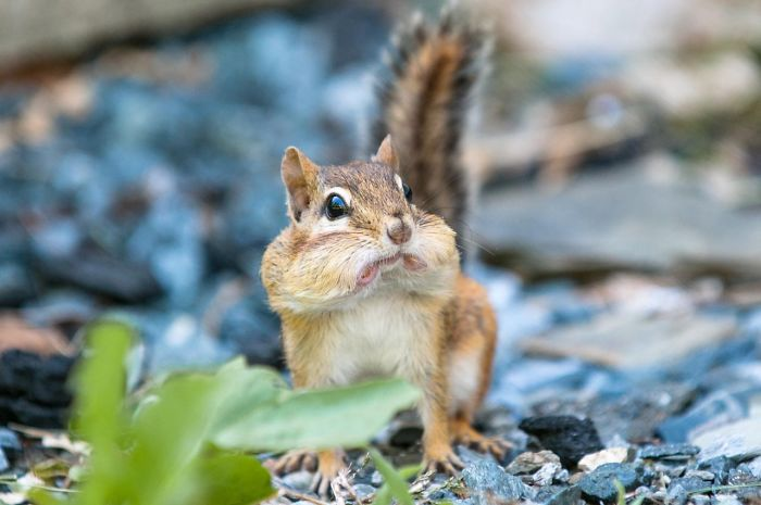 Squirrel Surprised