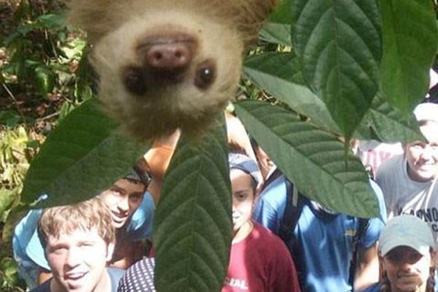 Best Animal Photobombs Ever 12 - Lemur