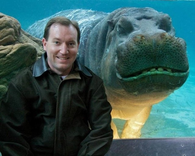 Best Animal Photobombs Ever 14 - Hippo