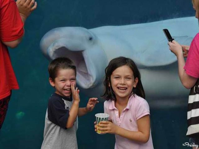 Funniest Animal Photobombs Ever 15 - White Whale