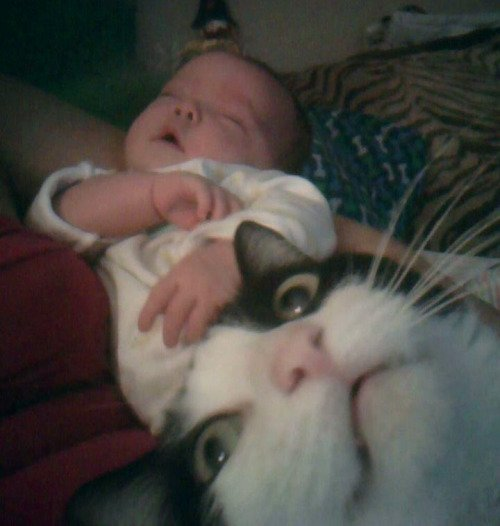 Best Animal Photobombs Ever 19 - Baby and Cat