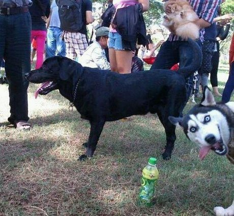Best Animal Photobombs Ever 2 - Funny Dog