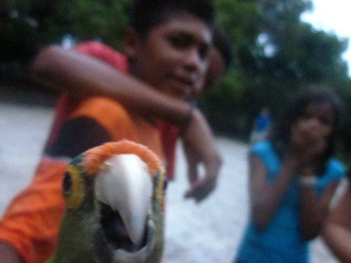 Best Animal Photobombs Ever 21 - Parrot