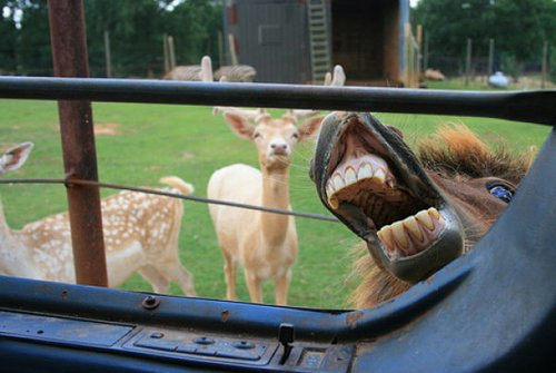 Best Animal Photobombs Ever 22 - Donkey Teeth