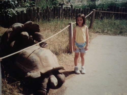 Best Animal Photobombs Ever 23 - Turtle