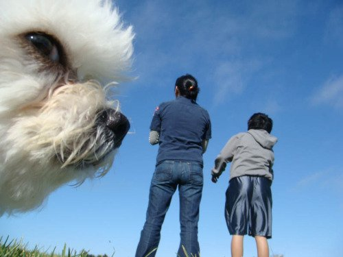 Best Animal Photobombs Ever 24a - Poodle
