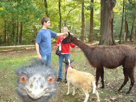 Best Animal Photobombs Ever 3 - Ostrich