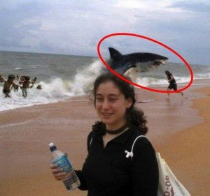 Best Animal Photobombs Ever