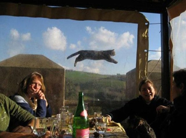 Funniest Animal Photobombs Ever 4a - Jumping Cat