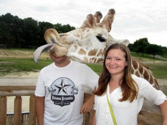 Fuuniest Animal Photobombs Ever 6a - Giraffe