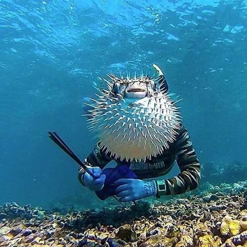 Best Animal Photobombs Ever 7 - Blow Fish