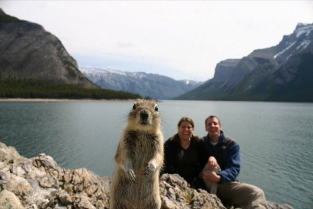 Funniest Animal Photobombs Ever 7a - Squirrel