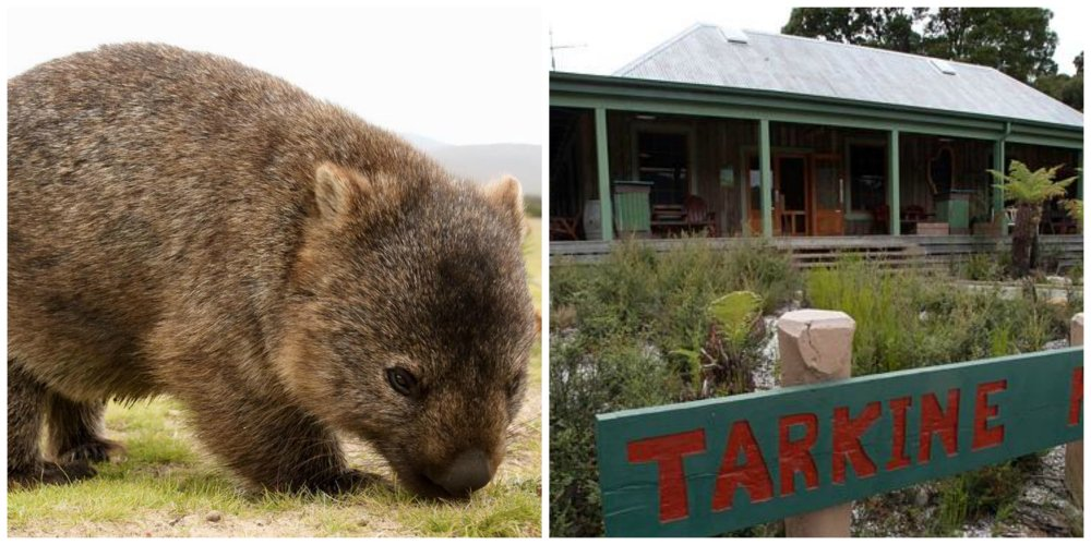 travel off the beaten track tasmania